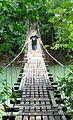 One of the many bridges of Bahia Drake.jpg