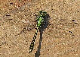 Afbeeldingen Insecten Bovenaanzicht