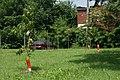 Orchard (9222005730).jpg