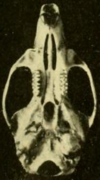 Skull, seen from below