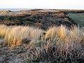 Ouddorp Dunes.jpg