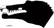 Silhouette of Oxalaia's head with the fossil jaw and snout fragments in place