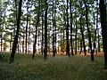 Přírodní park Baba412.jpg