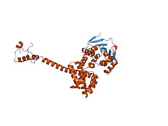 CDC37 - complex of hsp90 and p50