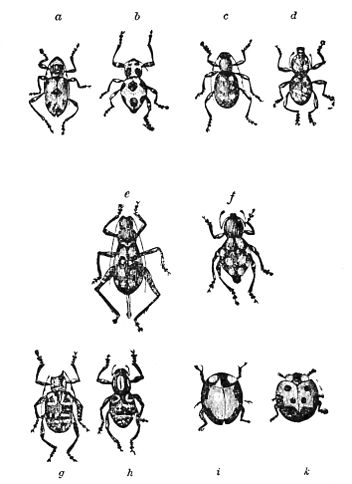 PSM V21 D618 Mimicking insects.jpg