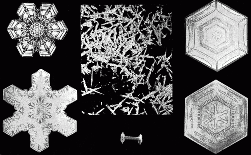 PSM V53 D088 Various snow crystal forms.png