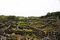 Paisagem Protegida de Interesse Regional da Cultura da Vinha da ilha do Pico, Santa Luzia, Concelho de São Roque, Açores, Portugal.JPG