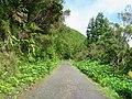 Paisagem entre Caldeiras e Lombadas - Ribeira Grande (59348237).jpg