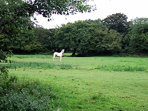 English: Pale horse In field between the railw...