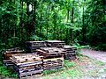 Pallets in forest.jpg