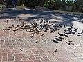 Palomas en el Jardín del Encino.jpg