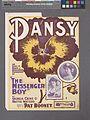 Pansy (NYPL Hades-1932244-1995550).jpg