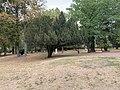 Parc Lefèvre - Livry Gargan - 2020-08-22 - 13.jpg