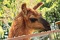 """Parcul de Animale - """"Moara de Vant"""" (7442533552).jpg"""