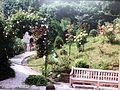 Park Villa Haas Kletter- und Strauchrosen.jpg