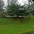 Parque Terra Nostra, Furnas, S. Miguel, Açores,Portugal - panoramio (7).jpg