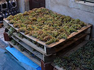 Grapes, left to dry for a passito wine, Marco ...