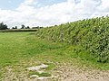 Pasture and hedge, Hall End of Wootton - geograph.org.uk - 471996.jpg