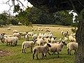 Pasture on West Woodhay Down - geograph.org.uk - 62369.jpg
