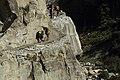 Path in Nepal - 6826 (22132637914).jpg