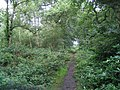 Path through Big Wood - geograph.org.uk - 498554.jpg
