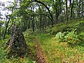 Path through Glentarken Wood - geograph.org.uk - 945316.jpg