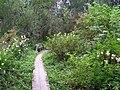 Pathway to lake Vallo - panoramio.jpg