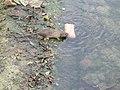 Petit rat (4).jpg