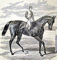 Petrarch (horse).jpg