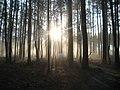 Photo of the Week - Foggy Morn at Great Dismal Swamp National Wildlife Refuge (VA) (8263420592).jpg