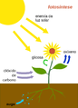 Photosynthesis-gl.png