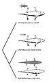 Phylogenetic bracketing temnospondyls.jpg