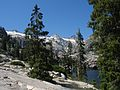 Picea breweriana Canyon Creek Lakes 1.jpg