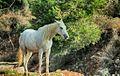 PikiWiki Israel 46695 horse.jpg