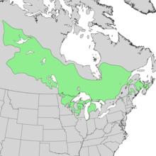 Pinus banksiana range map.png