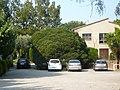 Pitosporum de Can Pau Torrents P1490647.jpg
