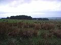 Plantations above Catton - geograph.org.uk - 298569.jpg
