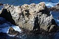 Point Lobos 21.JPG
