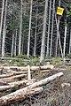 Pokácené stromy Na Ztraceném.jpg