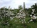 Poland. Warsaw. Powsin. Botanical Garden 041.jpg