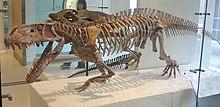 Prestosuchus AMNH.jpg