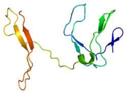 Protein RELB PDB 1zk9.png