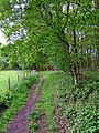 Public footpath from the Wyre Forest to St. John's Lane - geograph.org.uk - 1310645.jpg