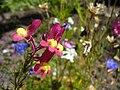 Purpleflowers8.jpg