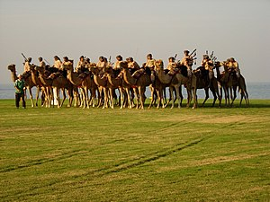 Royal Oman Police - ROP Camel Band