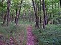 Radotín, pěšina v lese nad Zderazskou.jpg