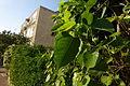 Ramat Gan Leaves 12 2015 (3).JPG