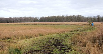 Redgrave and Lopham Fens - The Waveney Trail. A raised footpath that separates areas of fenland within the reserve.