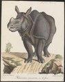 Rhinoceros unicornis - 1700-1880 - Print - Iconographia Zoologica - Special Collections University of Amsterdam - UBA01 IZ22000221.tif