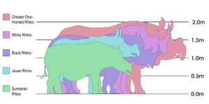 Rhino species size comparison Original text: I...